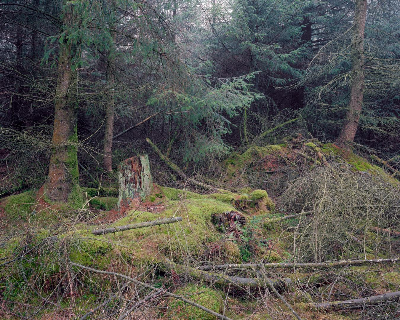 Plantation, Grizedale Forest, Cumbria