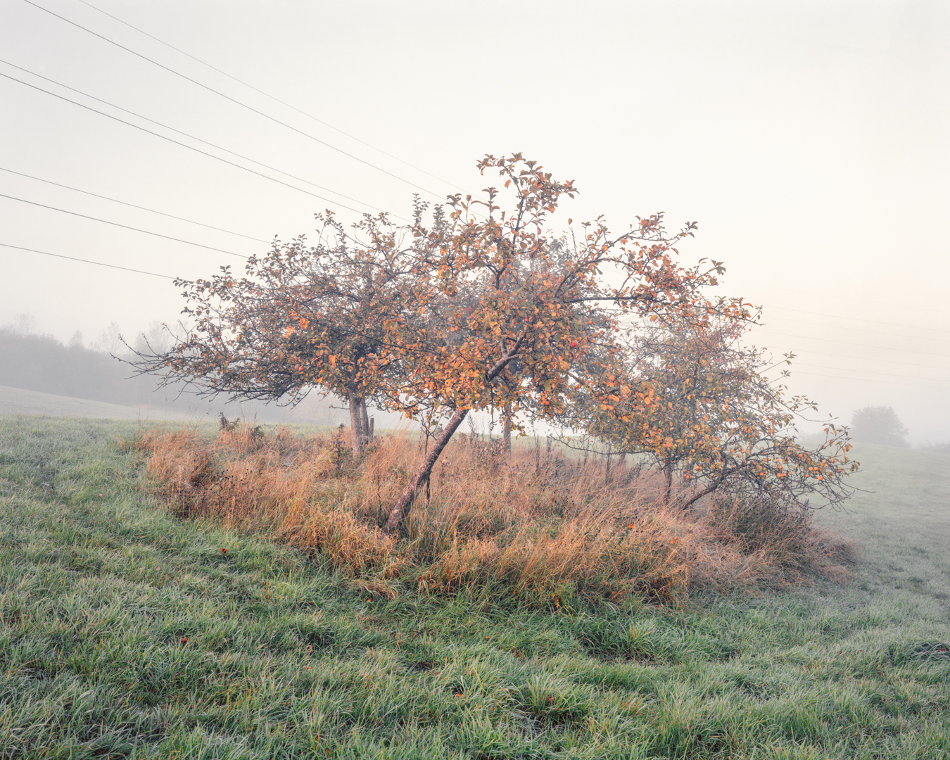 Fruit Trees, Lydiard Tregoze 2015