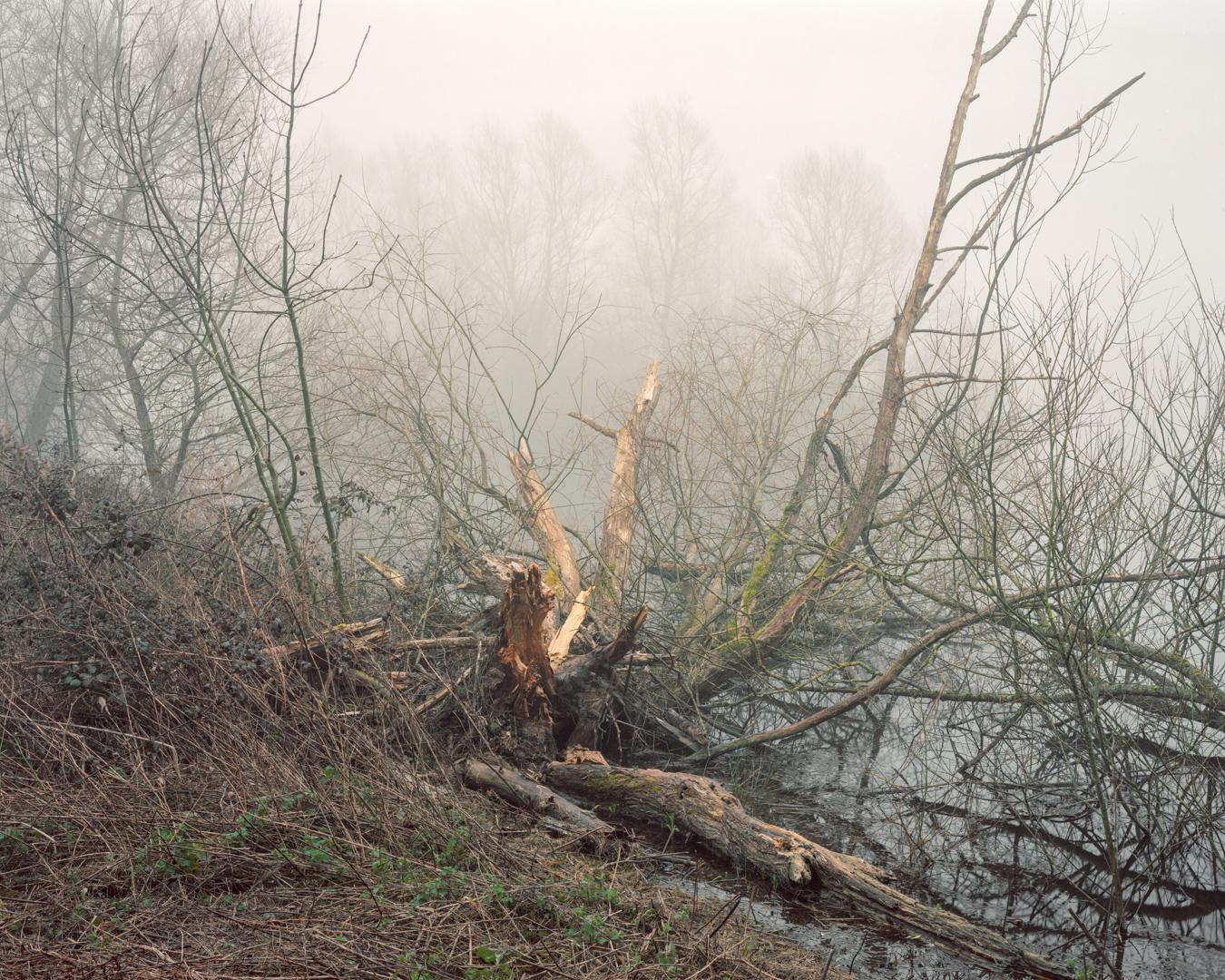 Wind fallen Willow, Waterhay, 2016